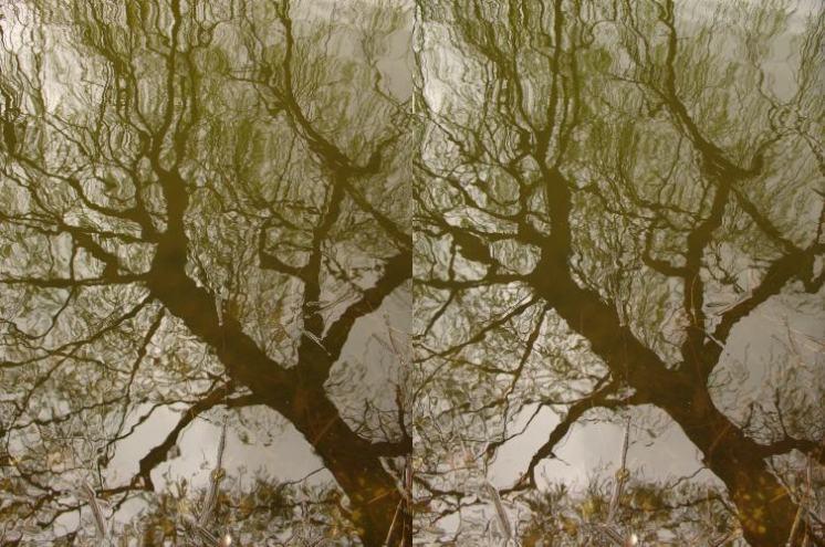 отражение.jpg