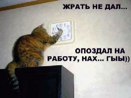 wildpussy_034.jpg